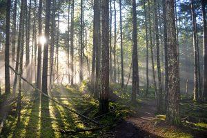 Image of Path through forest. (c) Sheena Davies
